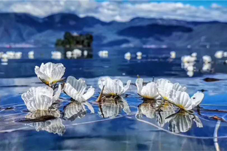 """Water beauty"" of Lugu Lake goes viral on WeChat"