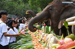 World Elephant Day marked in SW China's Yunnan