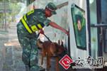 Yunnan leads in anti-drug battle