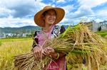 In pics: scenes of bumper harvest in Nanjian County