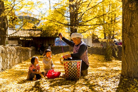 Ginkgo Village: A story of nature and wealth