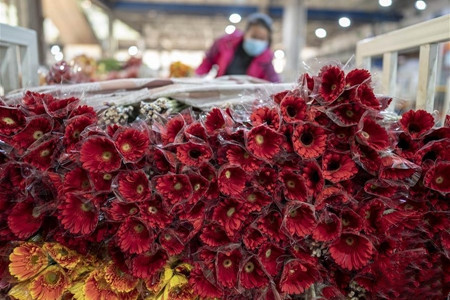 Asia's largest flower market in Yunnan resumes operation