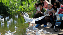 Wintering gulls keep date with China's spring city