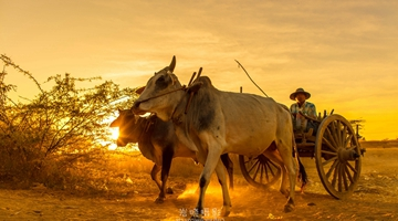 Yunnan photographer records golden Myanmar during trips