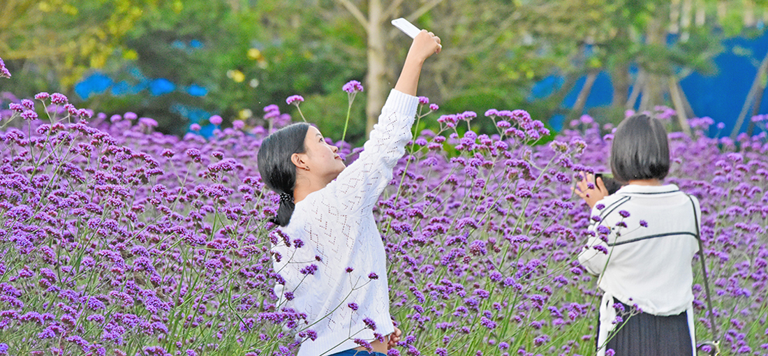 Floral blooms paint Yunnan county in vivid colors