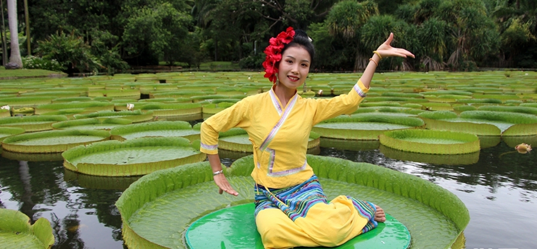 Water lilies in S. Yunnan form leave boats for tourists